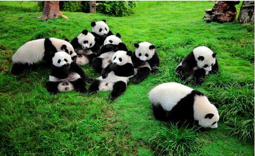 太空泥熊猫步骤图片